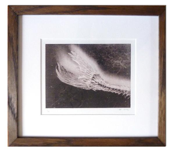 Fish-framed.lo