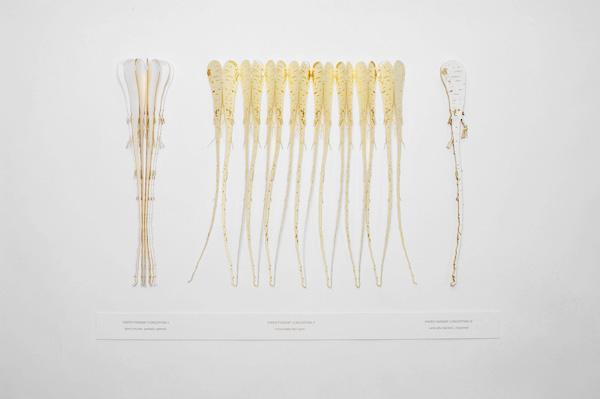 paper parsnip concertinas